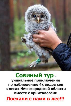 Совиные туры по Нижегородчине