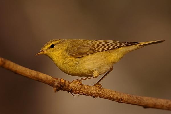 птица на искусственном фоне