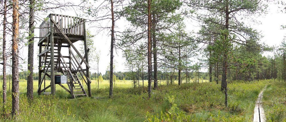 вышка для наблюдения за птицами в Финляндии