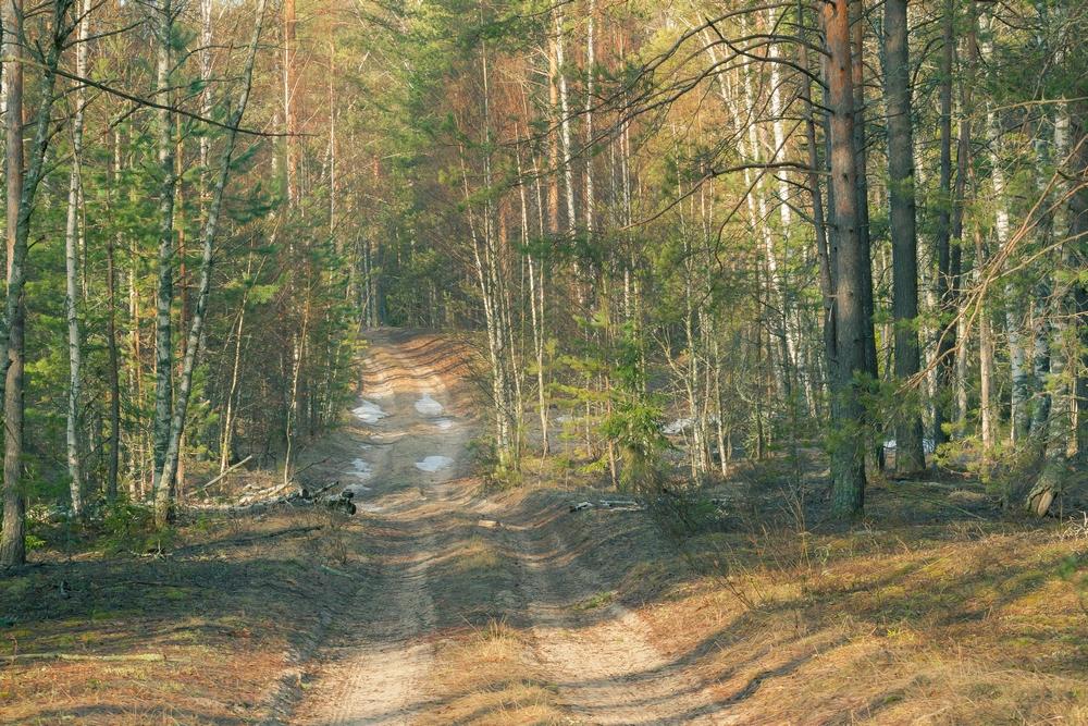 Дорога на глухариный ток