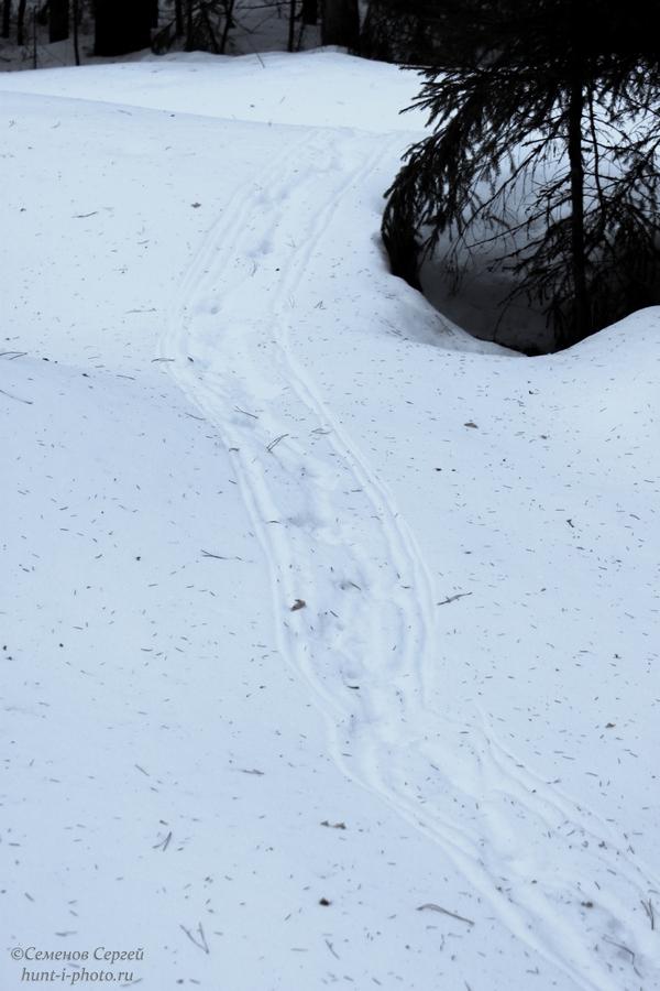 глухарь чертил на снегу