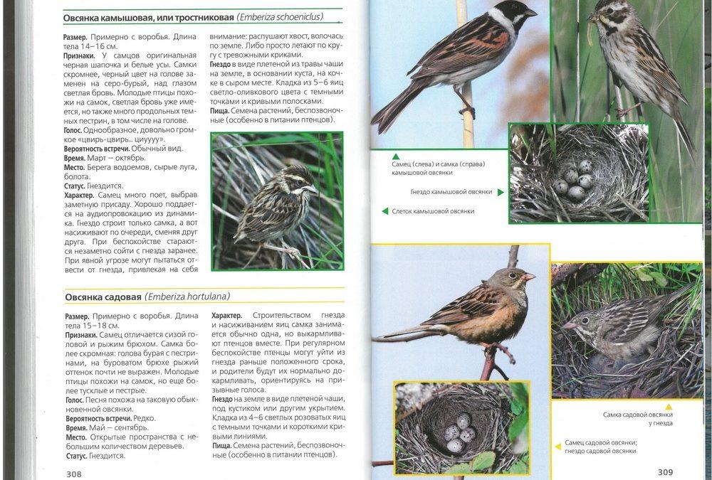учимся определять птиц