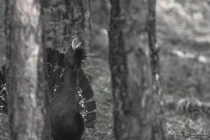 В лесной глухомани