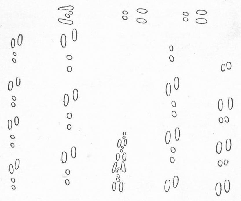 Слева направо: концевые следы, концевые следы со скидочными, жировые следы, гонные следы, гонные следы прыжками