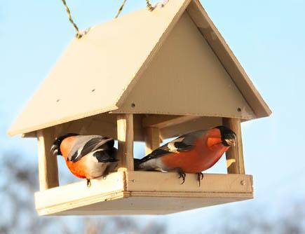 видео птиц на кормушке