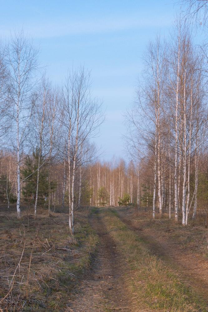 Дорога в весенний лес