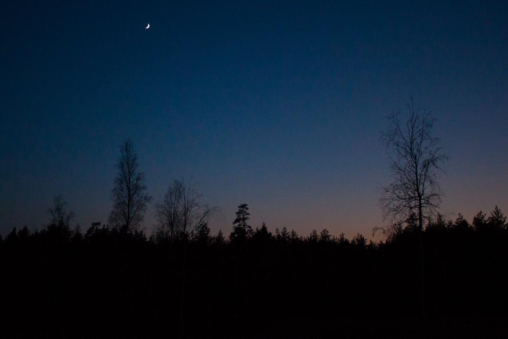 ночь возле глухариного тока