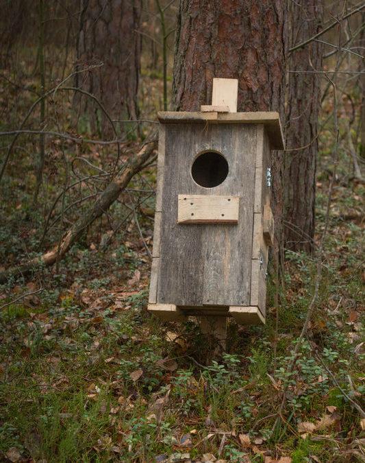 гнездышко для совы