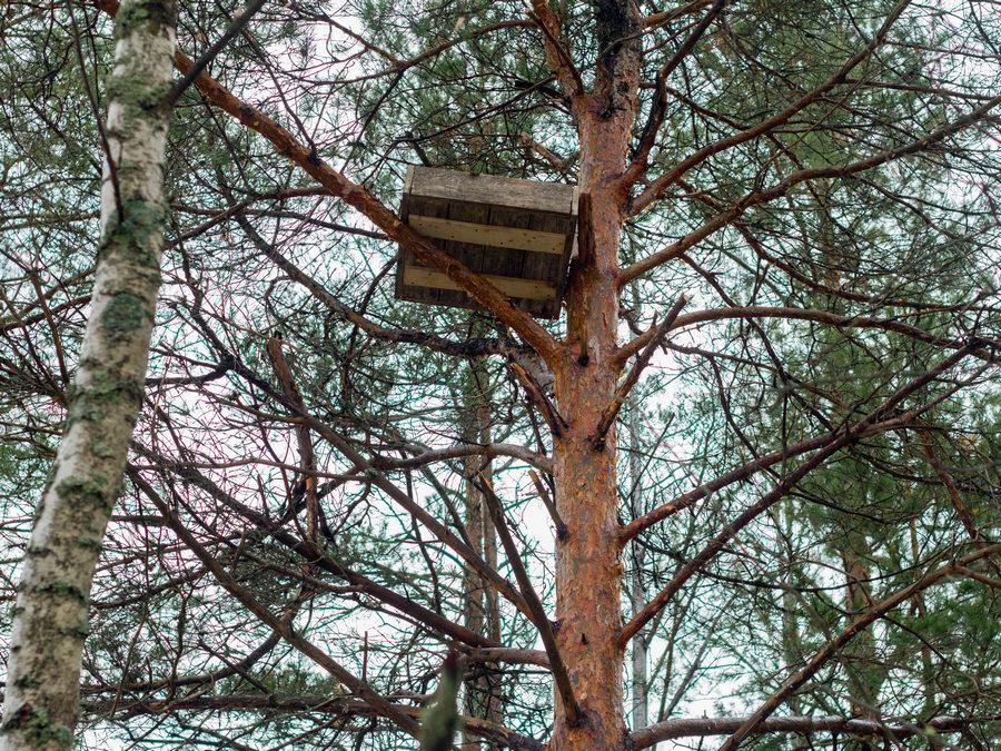 гнездо для нефсыти
